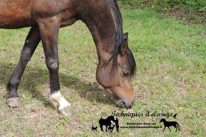 Journée Nutrition Equine en Savoie