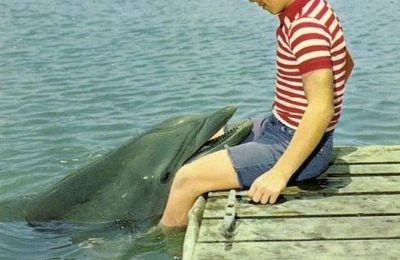 FLIPPER IL DELFINO (serie TV 1964)