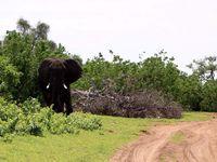8/12 - Botswana, le retour!