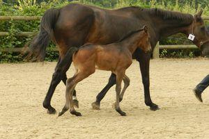 Etape 4 de l'analyse d'une ration cheval, poney ou âne : Comparer sa ration actuelle à ses besoins