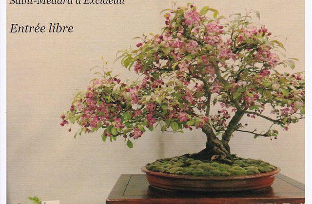Mieux connaître les bonsaïs