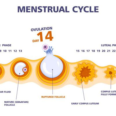 Menstrual Disorders; Signs, Diagnosis & Treatment.