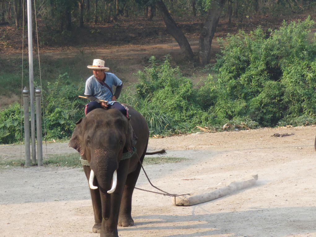 Brèves de trêve....... Des éléphants qui ne peignent pas la girafe...
