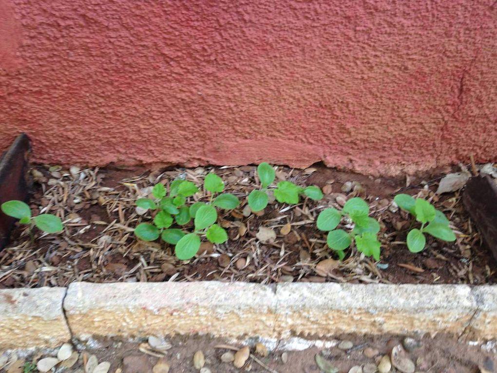 Ma dernière passion , jardiner et planter mon potager!!