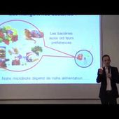 """L'intestin : notre deuxième cerveau ?"""": conférence de Gabriel Perlemuter"""
