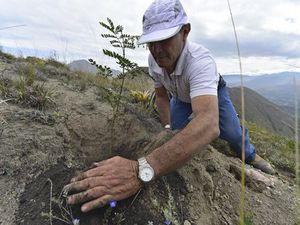 En une journée, 45 000 Equatoriens ont planté plus de 647 000 arbres sur tout le territoire, record mondial à battre. | AFP