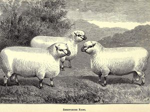 Shropshire : autres gravures.