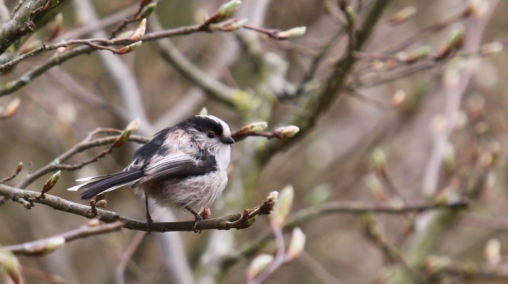 Différents échassiers, palmipèdes ou oiseaux photographiés lors de mes ballades ou dans mon jardin.