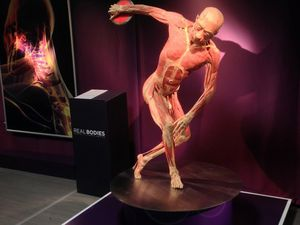 Corpi in mostra a Milano - The art of the Brick - The Real Bodies