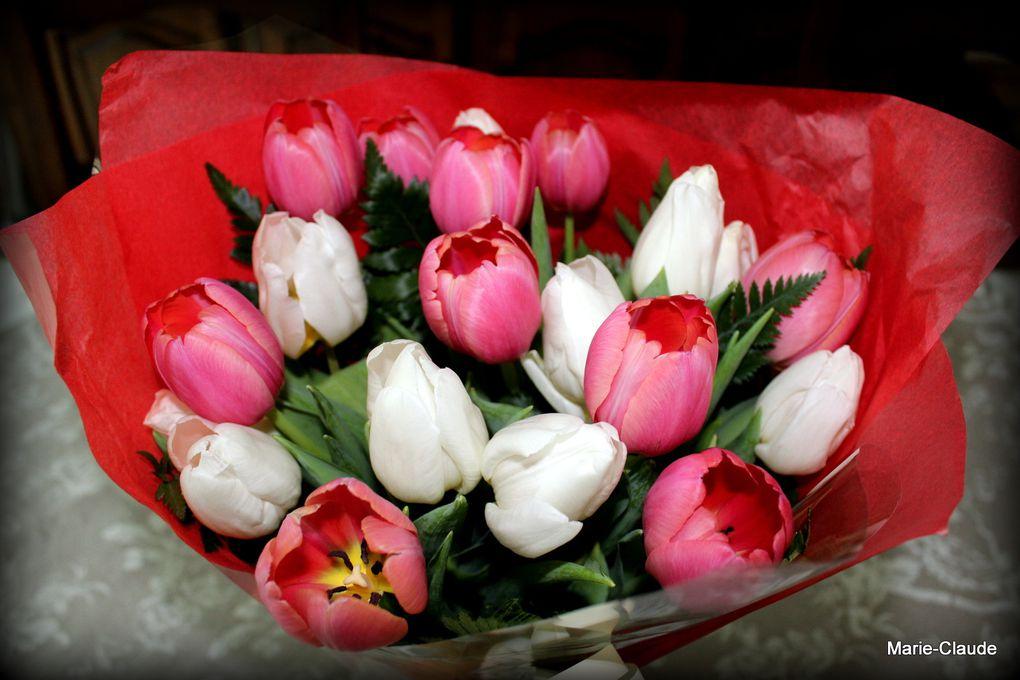 Des tulipes printanières