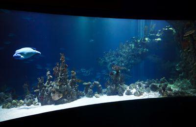 Quand Mercure nage dans l'Aquarium...