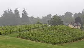 The vineyard of Montana