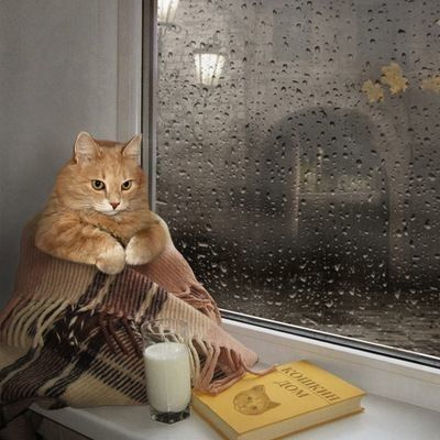Chat ...Pause lecture