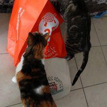 Des chats curieux...