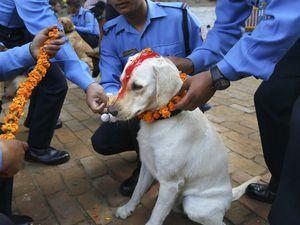 Quand le Népal rend hommage aux chiens