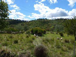 C'est vert mais nous sommes bien en Provence