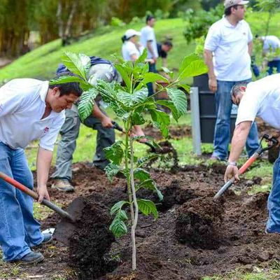 Planting trees to save the planet