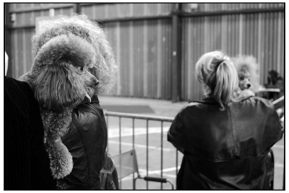 Album - 994_2009 / 2010 Expositions Canines