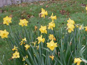 Sur le site aquarev, fleurs et taupinières...