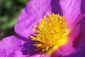 #fmsphotoaday April 16 : Your favourite colour