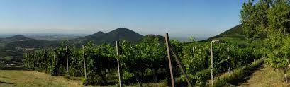 Veneto and  Wine