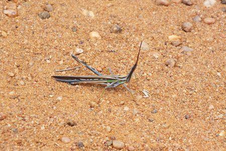Quelques photos de l'univers bio-minéral de l'Afrique du Sud