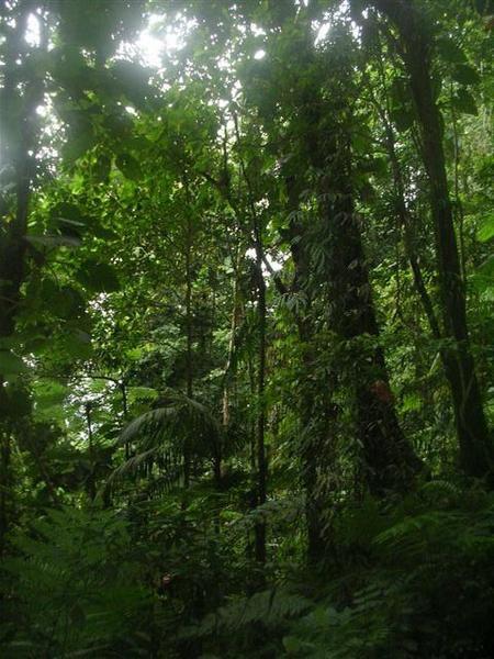 Apperçu de la végétation, des lumières de cette promende en forêt....