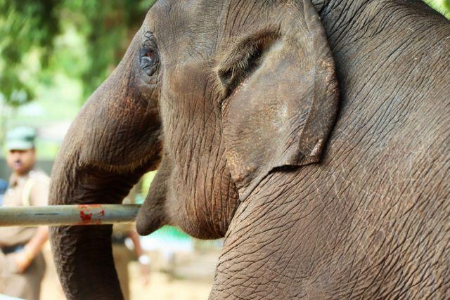 87 Orphelinat éléphants Sri Lanka