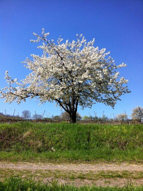Album - 20110409 - Domaine de l'arbre Blanc