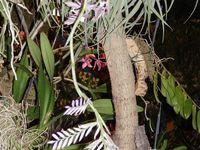 Exposition d'orchidées à Volgelsheim