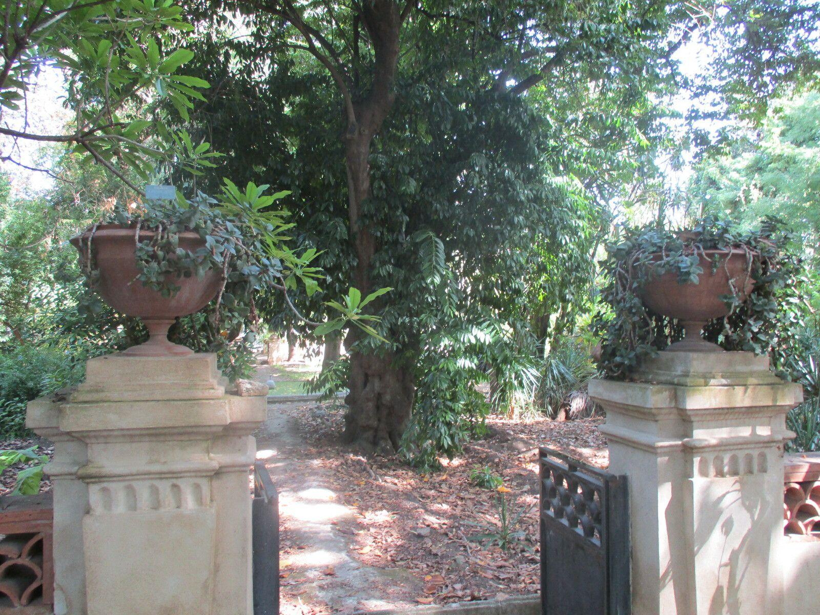 Sicile - Palerme : Le jardin botanique