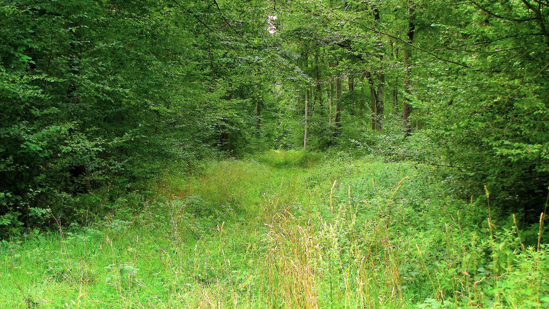 le GR655 dans les Forêts de Laigue et de Compiègne