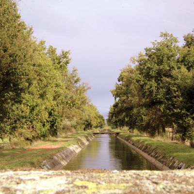 Balade au bord du canal (42600 Savigneux)