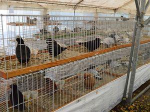 89ème exposition avicole à Algrange en 2017