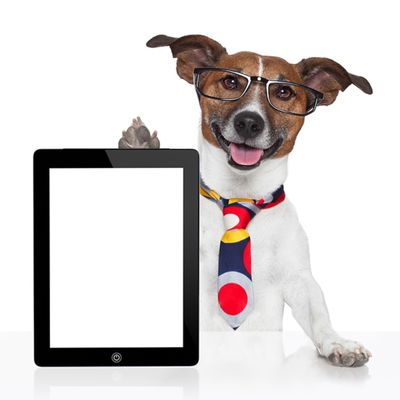 videos: les chiens  malins