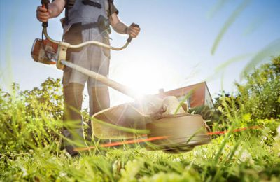 Lawn Care Services You May Need