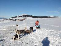 Neige - chiens de traîneaux CM1