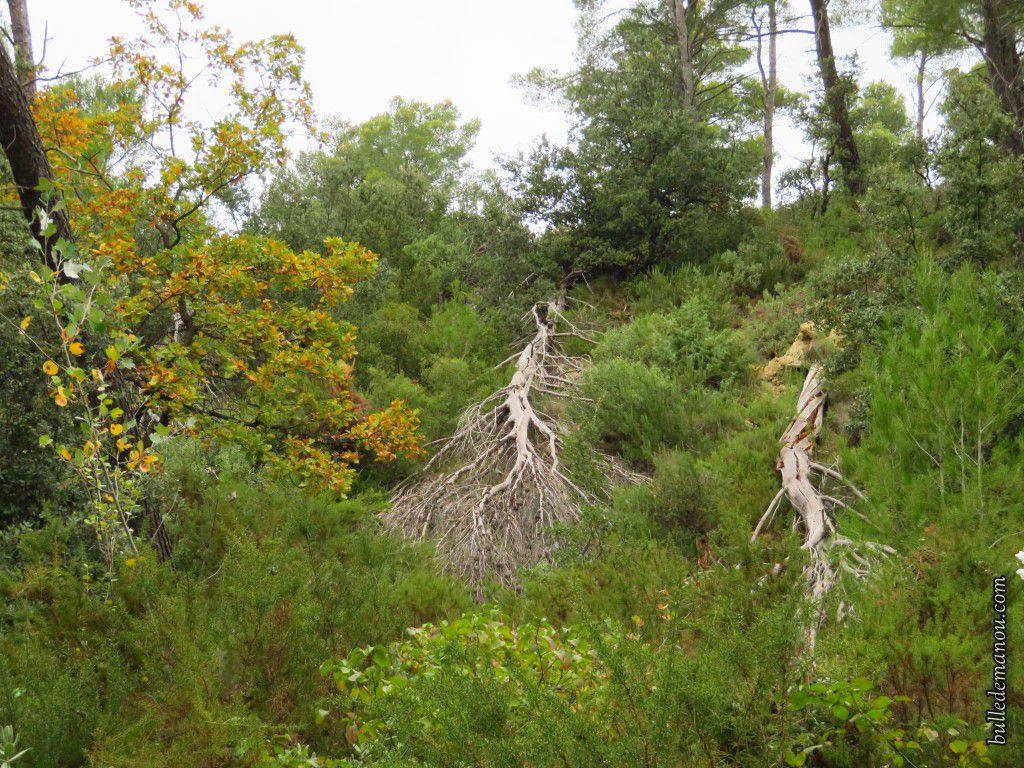 La forêt plus sauvage et les champs