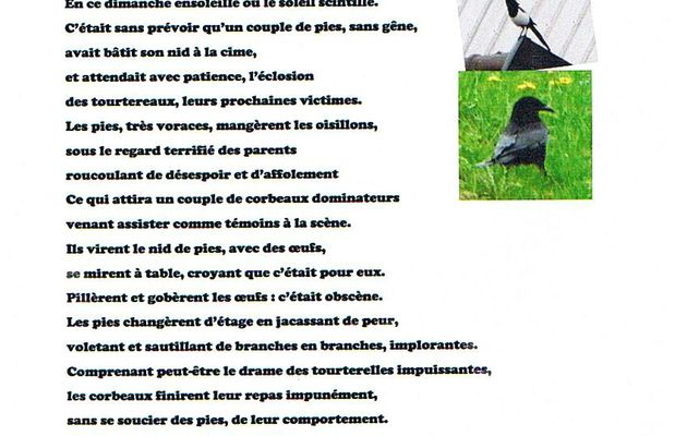 Les tourterelles, les pies et les corbeaux par Albin Lanaro