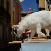 Chats pitres et arts - Miaulerie de rouquins