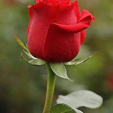 """""""Contrairement aux roses les couilles s'offrent par nombre paires..."""""""
