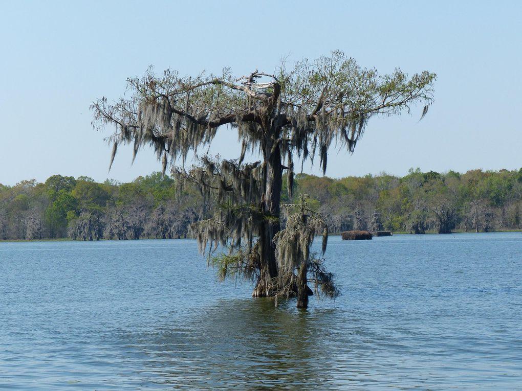 Louisiane, Cameron, Abbeville, Lac Martin, Thibodaux, Segnette State Park,