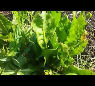 Le jardin en avril / jardin Bio facile / permaculture