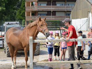 Stage Equestre Hem (22/07-26/07)