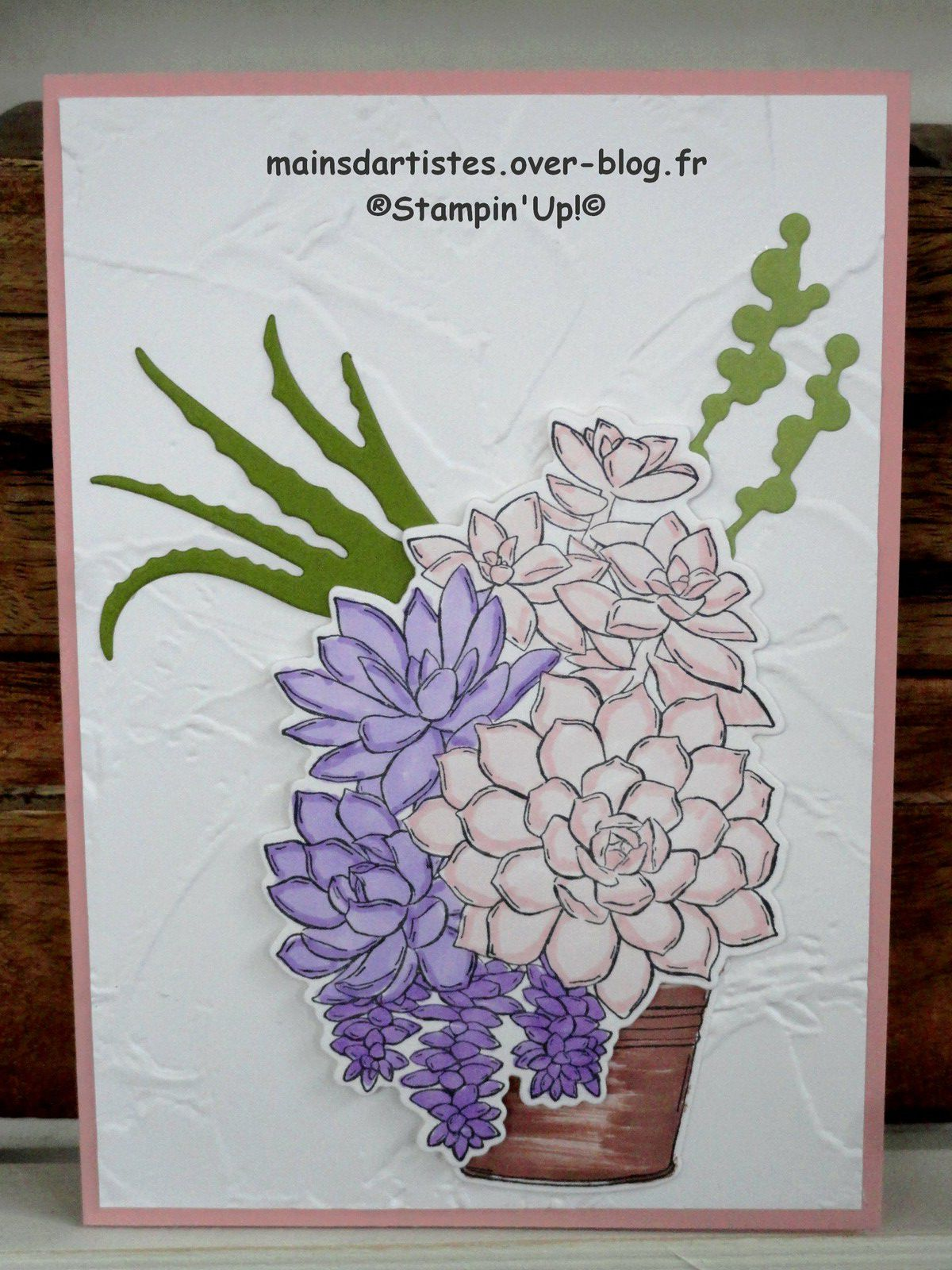 SIMPLY SUCCULENTS,STAMPIN'UP!.