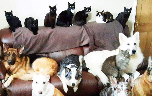 Une femme reçoit miraculeusement les 17 animaux domestiques pour s'asseoir immobile pour une photo