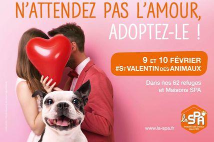 Arry La Saint-Valentin des Animaux le 9 et 10 février 2019