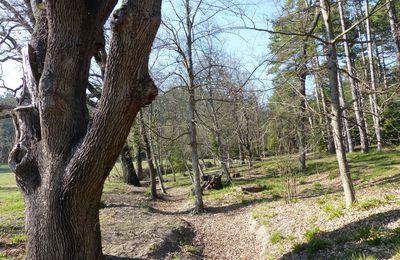 La Font de l'Orme, arboretum de Mérindol.