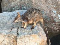 Les Animaux en Australie par Albane