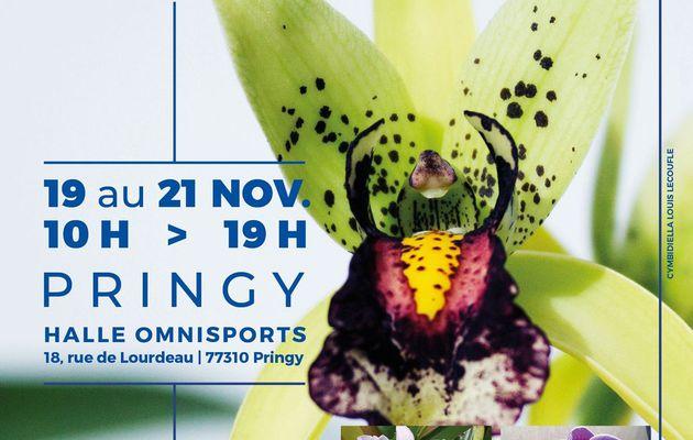 Biennale d'orchidées du 19 au 21 novembre 2021 (Orchidée 77)